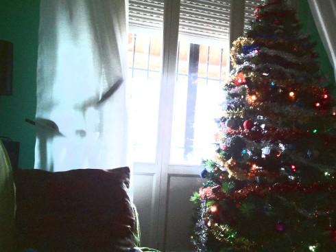 Domus Saurea Xmas Tree - foto di TT