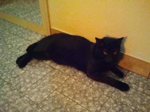 Il gatto Palmiro - foto di TT