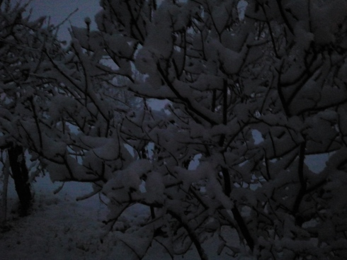 Shake my tree - foto di TT