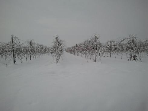 le vigne che sonnecchiano lungo la stradina lunga e tortuosa del posto in riva al mondo - foto di TT