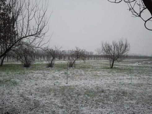 prima neve alla Domus Saurea - foto di TT