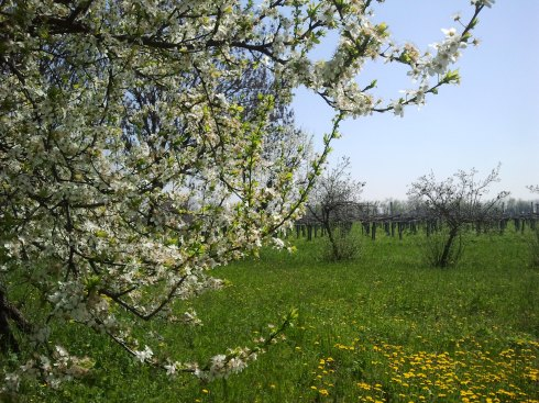 It's the springtime of my loving nel posto in riva al mondo - foto di TT