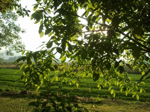 Thru' the trees of the Domus Saurea - foto di TT