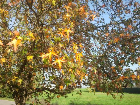 Domus Aurea Flora Aurea - foto di TT