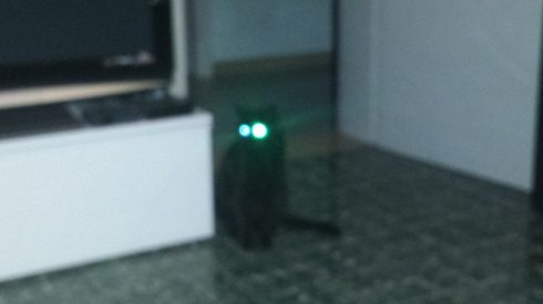 Il gatto Palmiro