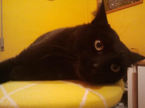 il gatto Palmiro (foto di TT)