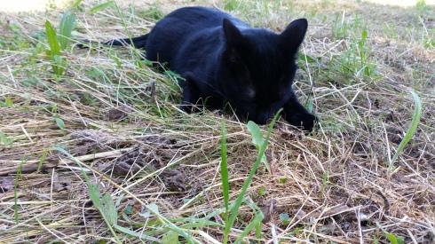Palmiro on the hunt (foto di Tyrrell)
