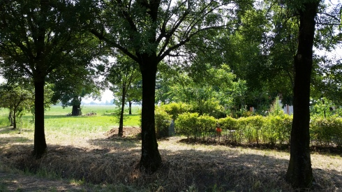 Saturday in the park (of domus saurea) (foto di TT)