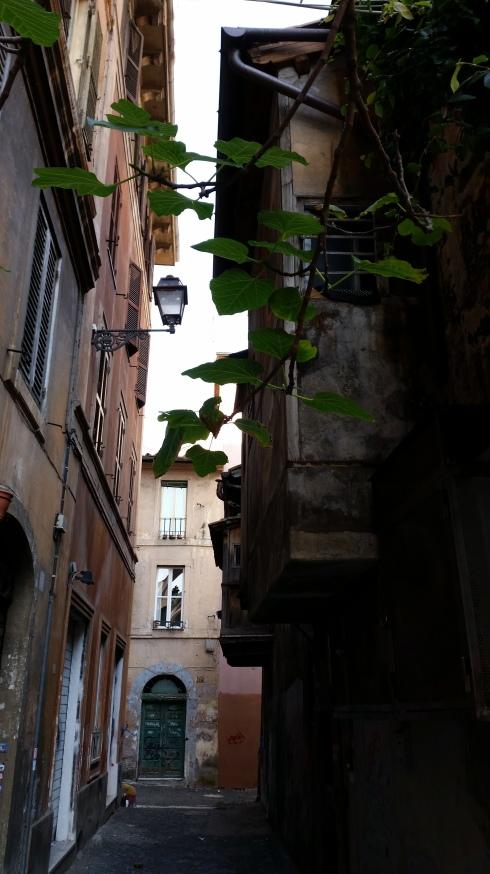 Via Madonna dei Monti (particolare) (foto di TT)