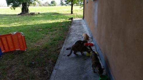 Palmiro tiene a distanza Maciste mentre gli altri gatti mangiano (foto di TT)