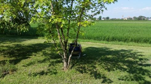 groupie under a maple tree reading a book (photo Tim Tirelli)
