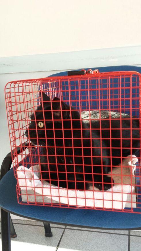 Il gatto Palmiro dal veterinario - foto della Terry