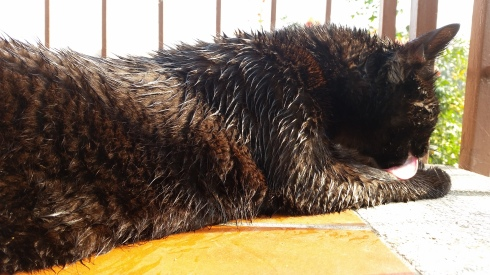 Palmiro washing the dew away - Foto TT