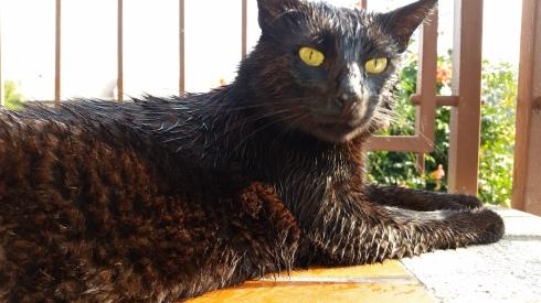 Palmiroi:I don't like the morning dew  - foto TT