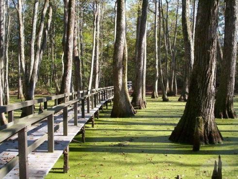 cypress swamp in mississippi natchez