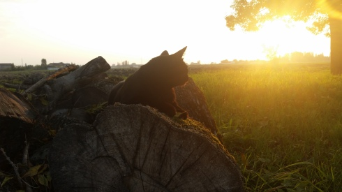 Palmiro the cat at sundown - photo TT