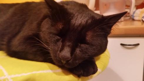 Sleepy Palmir Estes (foto Tyrrell)