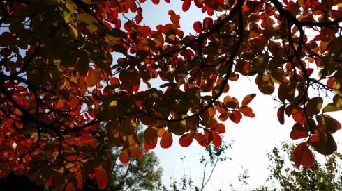 October at Domus Saurea - Photo TT