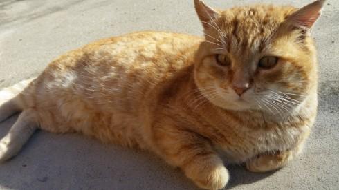 Il gatto Pato - foto TT