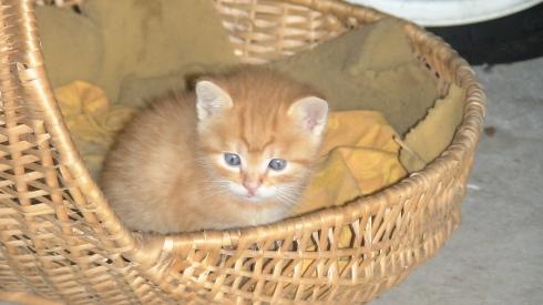Il gatto Pato, giugno 2008 - foto TT