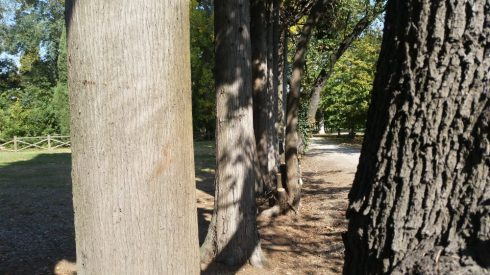 Parco di Villa Vistarino - Stonecity - foto TT