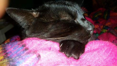 Sleeping Palmir - foto Tyrrell
