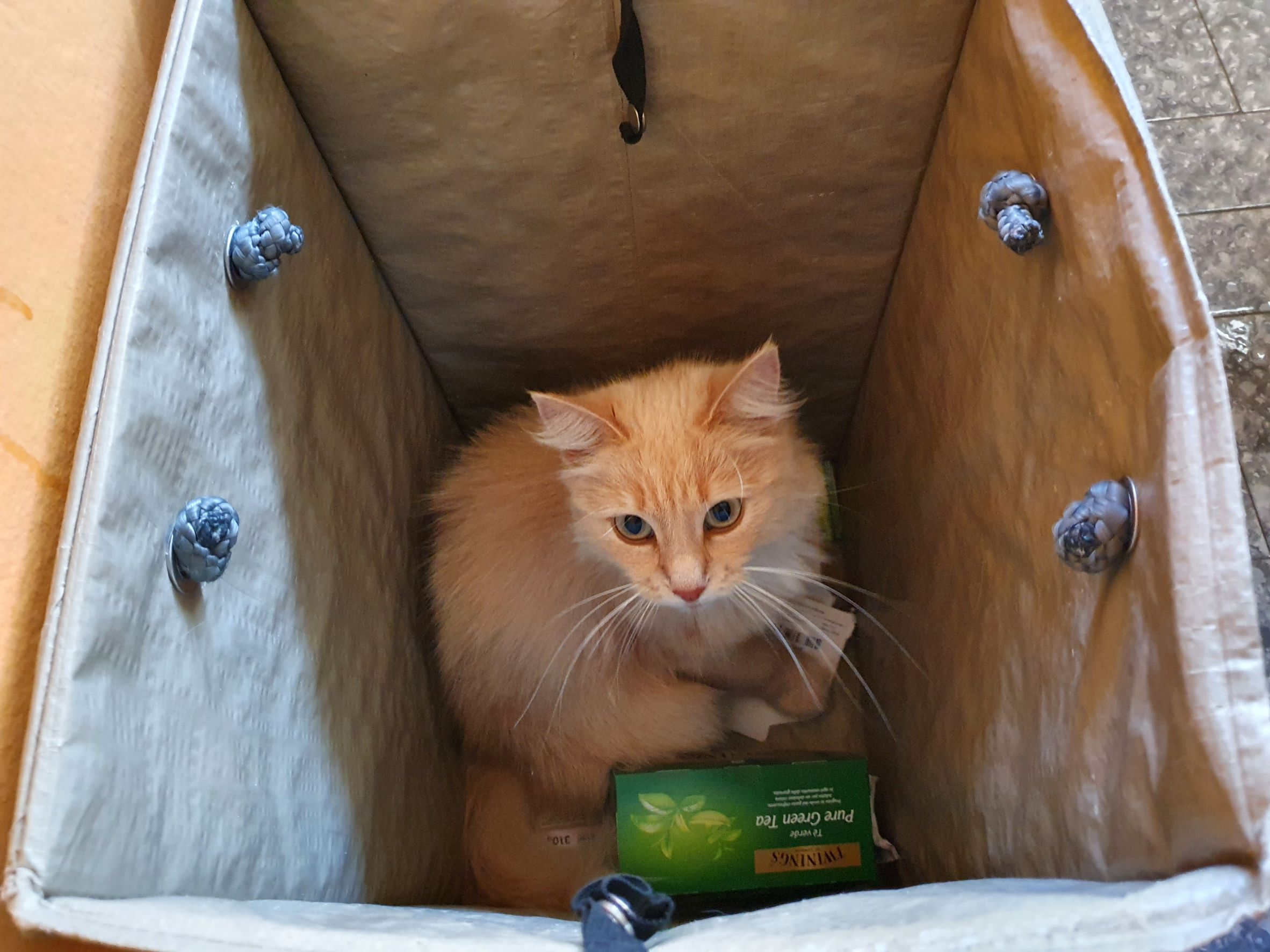Streaky - Pussycat in the recycling bins - Domus Saura luglio 2021 - foto TT